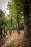 Un chemin caché dans le bois Photo libre de droits