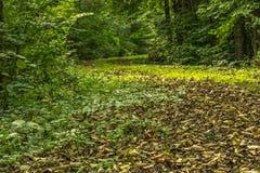 Un chemin dans la forêt Photo libre de droits