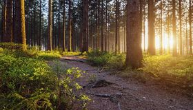 Un chemin dans la forêt Images stock