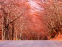 Un chemin dans la forêt Images libres de droits
