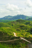 Un chemin dans la forêt Photos libres de droits