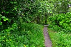 Un chemin dans la forêt d'été mène à un pont en bois Projectile horizontal Photographie stock libre de droits