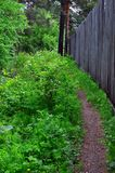 Un chemin dans la forêt d'été mène le long d'une haute barrière en bois Photographie stock