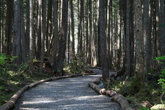 Un chemin dans les bois Images stock
