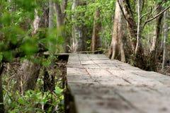 Un chemin dans les bois photographie stock
