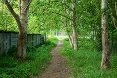 Un chemin dans une forêt verte Photos libres de droits