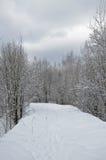 Un chemin dans une jeune forêt Photo libre de droits