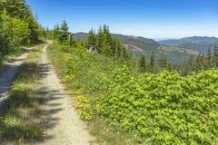 Un chemin de chemin de terre serpente le long d'un pré de montagne un jour ensoleillé Photographie stock