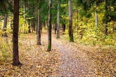 Un chemin de enroulement entre les arbres dans une forêt mélangée en automne image stock