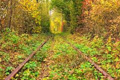 Un chemin de fer dans le tunnel célèbre de forêt d'automne de l'amour a formé par des arbres Klevan, obl de Rivnenska l'ukraine Photos libres de droits
