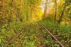 Un chemin de fer dans le tunnel célèbre de forêt d'automne de l'amour a formé par des arbres Klevan, obl de Rivnenska l'ukraine Photo libre de droits