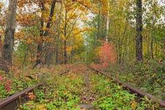 Un chemin de fer dans le tunnel célèbre de forêt d'automne de l'amour a formé par des arbres Klevan, obl de Rivnenska l'ukraine Image libre de droits
