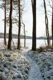 Un chemin de l'hiver à travers la forêt Images stock