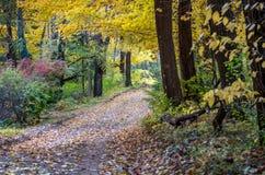 Un chemin de saleté a couvert des feuilles de vacarme prend un dans une belle forêt colorée au Michigan Etats-Unis photo stock