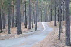 Un chemin de terre à la forêt de colline au printemps Image libre de droits