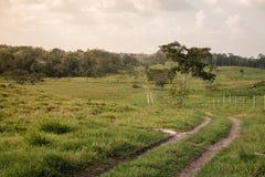 Un chemin de terre d'enroulement dans un pré de roulement Photographie stock libre de droits