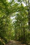 Un chemin de terre dans les bois en Pennsylvanie Photographie stock