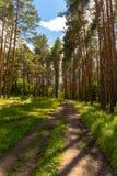 Un chemin de terre dans une forêt de pin Photos stock