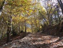 Un chemin des arbres en automne Photo libre de droits