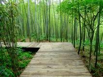 Un chemin en bois à travers une forêt en bambou Photos libres de droits