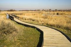 Un chemin en bois 2 Photo stock