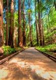 Un chemin en bois de marche à travers la forêt Image libre de droits
