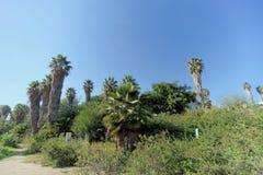 Un chemin en parc avec des palmiers Image libre de droits