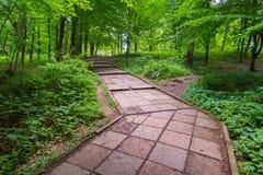 Un chemin en parc a garni des tuiles carrées fonctionnant parmi l'herbe verte et les buissons avec les arbres rarement croissants images stock
