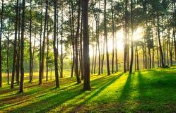 un chemin est dans la forêt verte Photo libre de droits