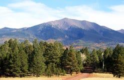 Un chemin forestier Images libres de droits