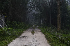 Un chemin forestier Photo libre de droits