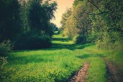 Un chemin forestier Image stock