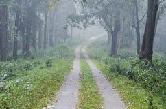 Un chemin forestier fonctionnant par une forêt brumeuse Photos libres de droits