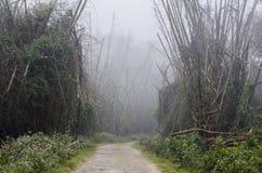 Un chemin forestier fonctionnant par une forêt en bambou brumeuse Photo libre de droits