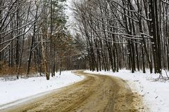 un chemin forestier neigeux Photo stock
