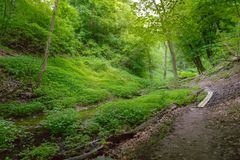 Un chemin forestier s'enroulant par un caniveau photo libre de droits