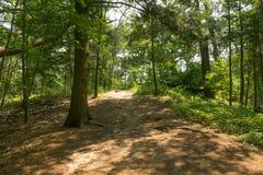 Un chemin ombragé à travers une forêt à feuilles persistantes photo stock