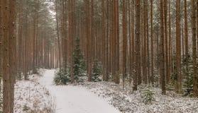 Un chemin ou une route de notation par une forêt dans la neige photo libre de droits