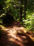Un chemin parmi des arbres image libre de droits
