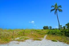 Un chemin rustique de plage par une paume solitaire Photos stock