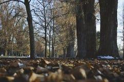 Un chemin treelined classé avec les feuilles tombées photos stock