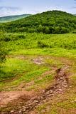 Un chemin vers la forêt Images libres de droits