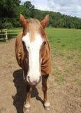 Un cheval Photos libres de droits