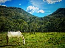 Un cheval alimentant parmi les montagnes photo libre de droits