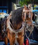 Un cheval autour de ville Photographie stock