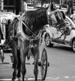 Un cheval autour de ville Photographie stock libre de droits