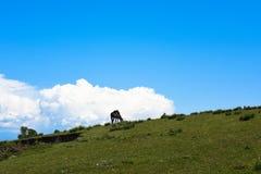 Un cheval avec les nuages blancs et le ciel bleu Photo stock