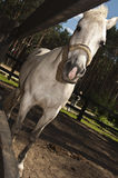 Un cheval blanc dans le pré Image stock