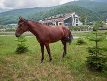 Un cheval brun est frôlé pendant l'été devant l'hôtel dans les montagnes image libre de droits