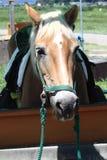 Un cheval dans le corral images stock